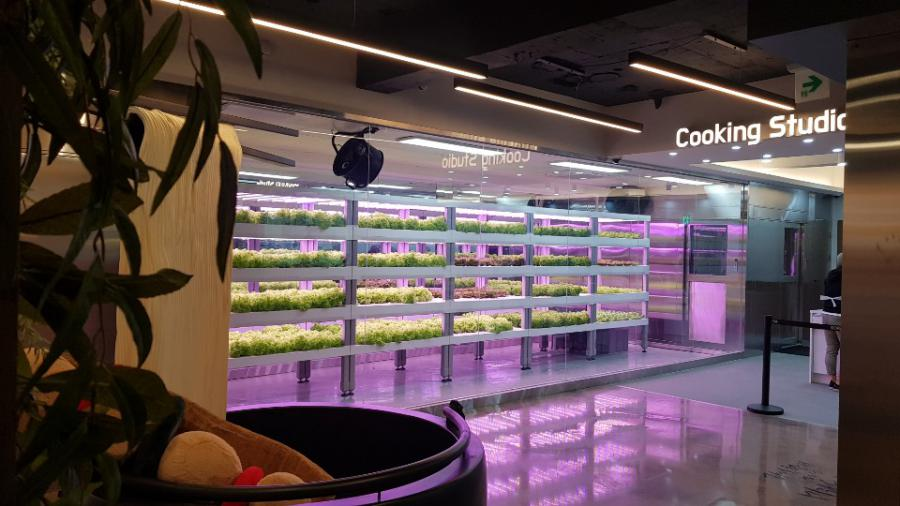 Smart farms sprouting in Seoul metro stations