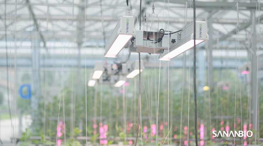 SANANBIO and Virex Technologies Joined Hands for the Vertical Farming and Horti-lighting Sector in Spain and Portugal