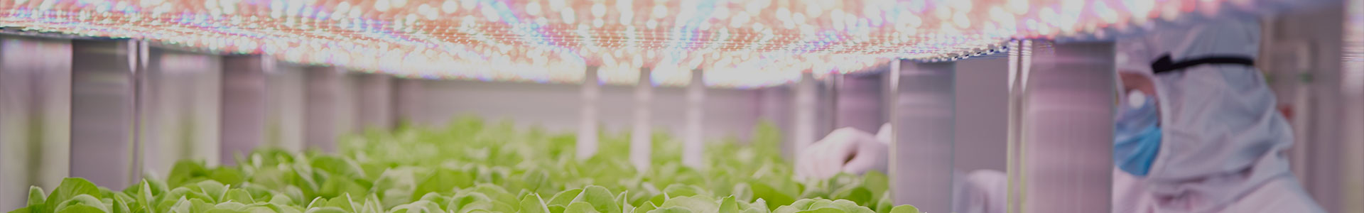 Simple Solutions for Complex Vertical Farming